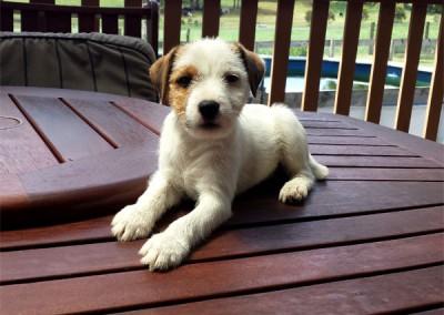 Missy As A Puppy