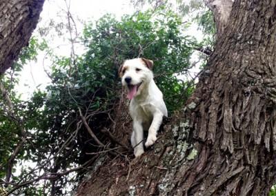 Missy Climbing