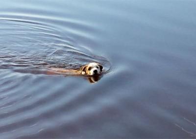 Missy enjoying a swim